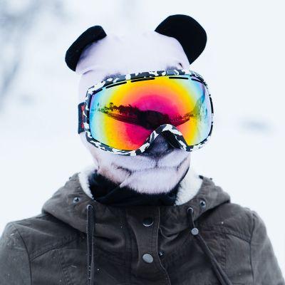Winter & Schnee Gadgets - Beardo Tierische Sturmhauben Skimasken