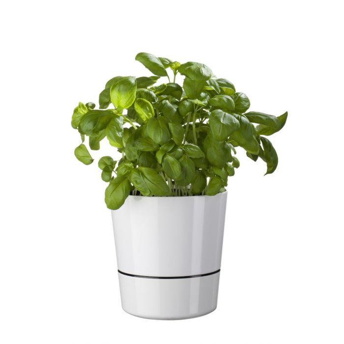 Herb Hydro Pot Blumentopf