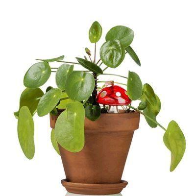 Wasser-Pilz für Zimmerpflanzen